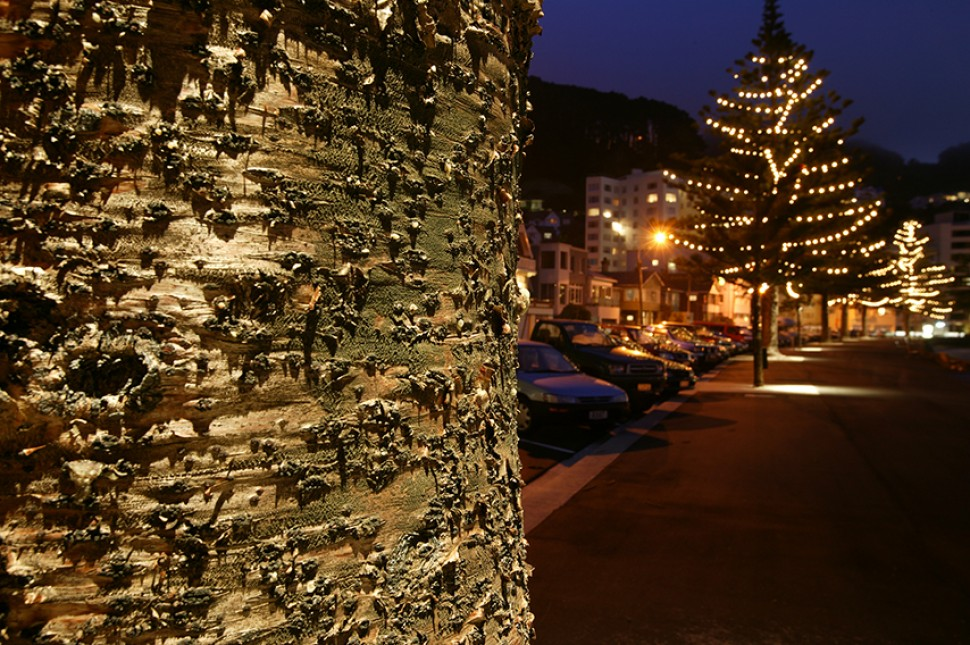 tree lights design wellington nz